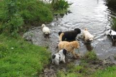 Hundene ved Svallerup og Vesterlyng 008