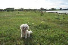 Hundene ved Svallerup og Vesterlyng 026