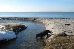 Svallerup strand 19.02.2011 029